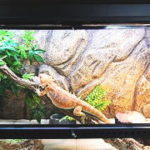 トカゲ(爬虫類)を健康に育てる照明器具・ライトの選び方と必要性