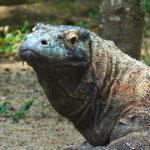 ニホントカゲの寿命とニホンカナヘビの寿命